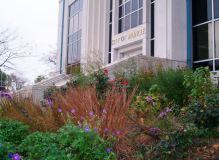 muncie city hall landscape 8-11